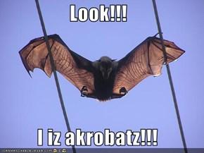 Look!!!  I iz akrobatz!!!