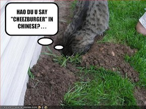 "HAO DU U SAY ""CHEEZBURGER"" IN CHINESE? . . ."