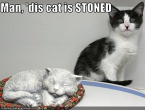 Man, 'dis cat is STONED