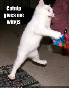 Catnip