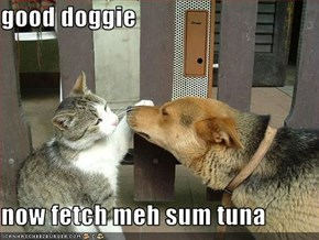 good doggie  now fetch meh sum tuna