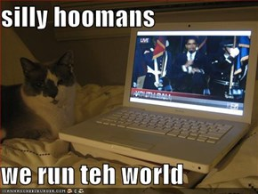 silly hoomans  we run teh world
