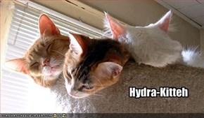 Hydra-Kitteh