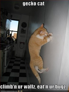 gecko cat  climb'n ur wallz, eat'n ur bugz