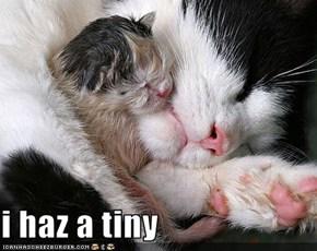 i haz a tiny