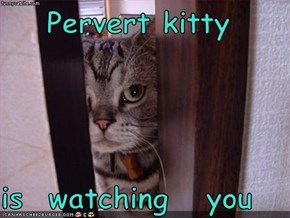 Pervert kitty   is  watching   you