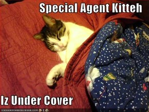 Special Agent Kitteh  Iz Under Cover