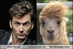 David Tennant Totally Looks Like This Windswept Llama