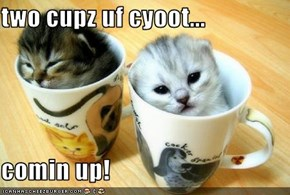 two cupz uf cyoot...  comin up!