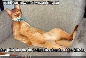 ...it ahl startid wen ai wuz ah tiny kat  dey pikd ahn me fur bein taller den da udder kittehs