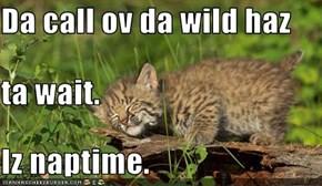Da call ov da wild haz ta wait. Iz naptime.