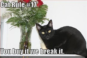 Cat Rule #17  You buy it we break it.