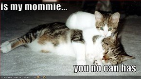 is my mommie...  you no can has