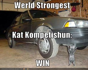 Werld Strongest Kat Kompetishun: WIN