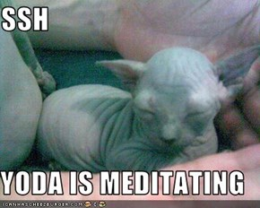 SSH  YODA IS MEDITATING