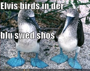 Elvis birds in der blu swed shos
