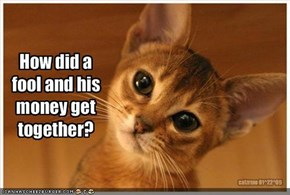 Confused Kitty Asks: