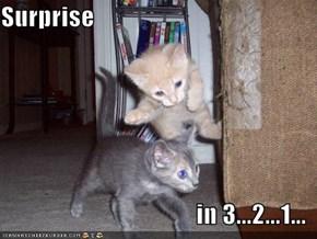 Surprise  in 3...2...1...