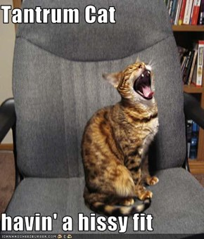 Tantrum Cat  havin' a hissy fit