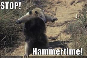 STOP!         Hammertime!
