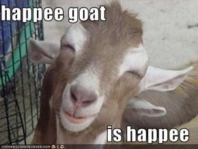 happee goat  is happee