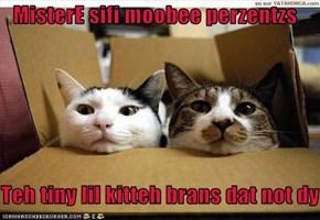 MisterE sifi moobee perzentzs  Teh tiny lil kitteh brans dat not dy