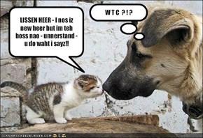LISSEN HEER - I nos iz new heer but im teh boss nao - unnerstand - u do waht i sayz!!