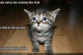 im sorry for eating the fish i did'nt mean too even though  i did