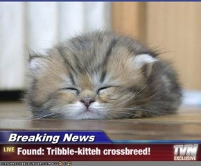 Breaking News - Found: Tribble-kitteh crossbreed!
