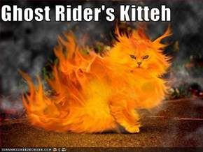 Ghost Rider's Kitteh
