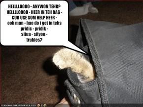 HELLLLOOOO - ANYWON TEHR? HELLLLOOOO - HEER IN TEH BAG - CUD USE SOM HELP HEER - ooh man - hao do i get in tehs pridic - pridik - situa - sityou -trubles?