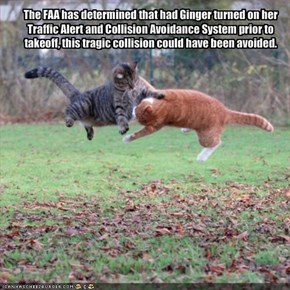 The FAA has determined that had Ginger turned on her  Traffic Alert and Collision Avoidance System prior to takeoff, this tragic collision could have been avoided.