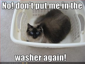 No! don't put me in the   washer again!