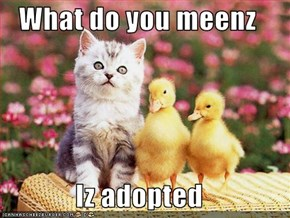 What do you meenz   Iz adopted