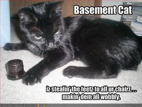 Basement Cat