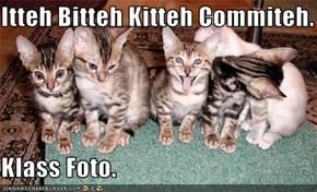 Itteh Bitteh Kitteh Commiteh.  Klass Foto.