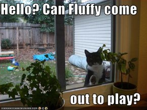 Hello? Can Fluffy come  out to play?