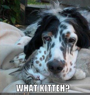 WHAT KITTEH?