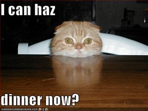 I can haz  dinner now?