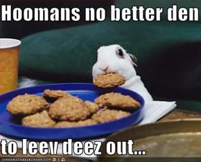 Hoomans no better den    to leev deez out...