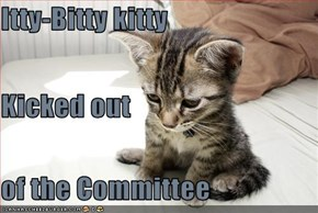 Itty-Bitty kitty Kicked out  of the Committee
