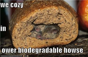 we cozy in  ower biodegradable howse