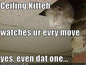 Ceiling Kitteh watches ur evry move yes, even dat one...