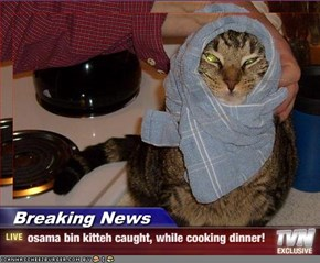 Breaking News - osama bin kitteh caught, while cooking dinner!
