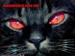 basementcat sees red