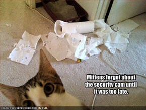 Mittens forgot about the security cam until it was too late.