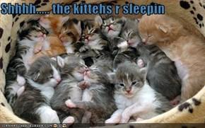 Shhhh..... the kittehs r sleepin