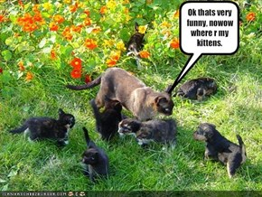 Ok thats very funny, nowow where r my kittens.