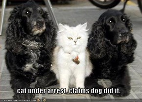cat under arrest. claims dog did it.