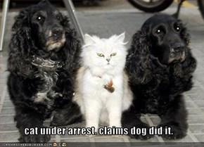 cat under arrest. claims dog did it.